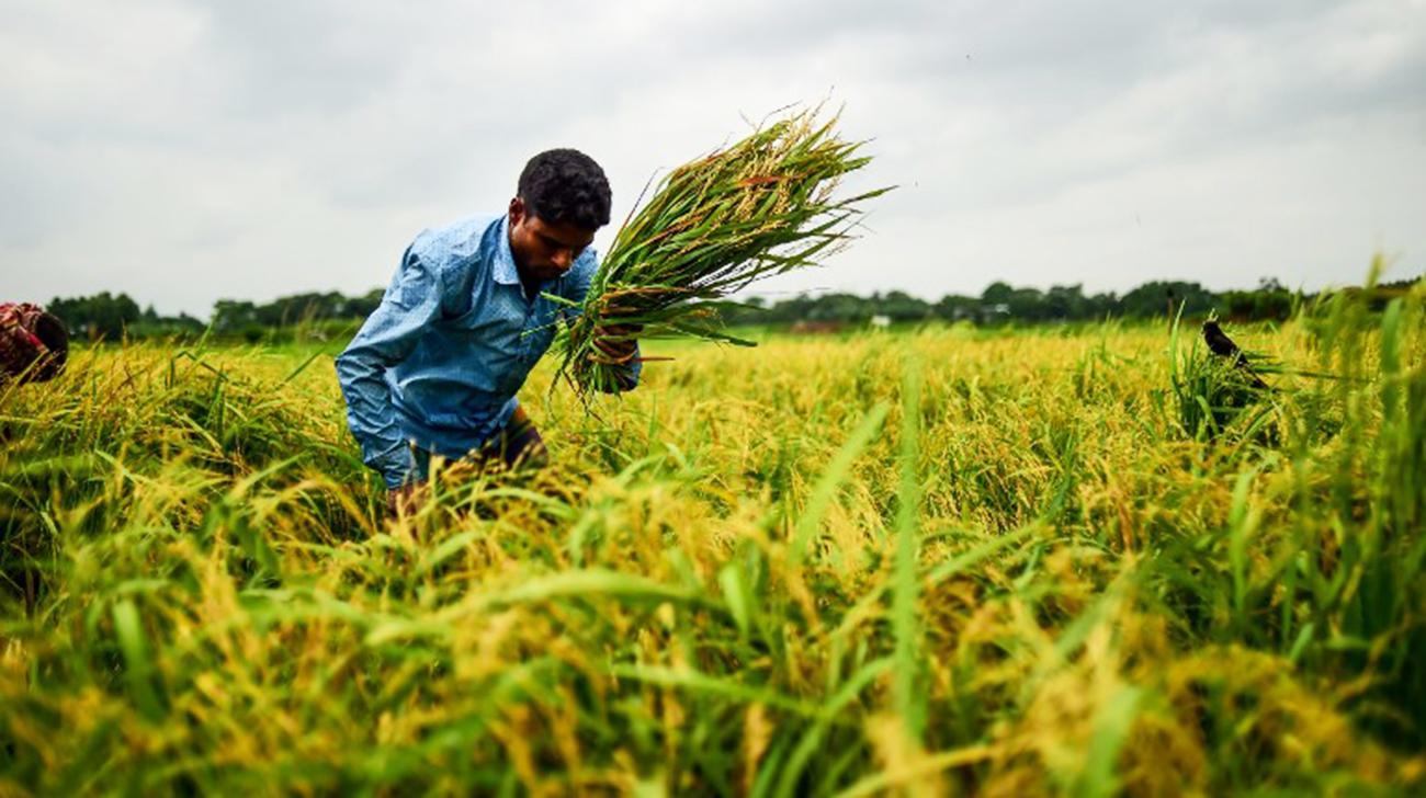 bangladesh-rice-afp-wb